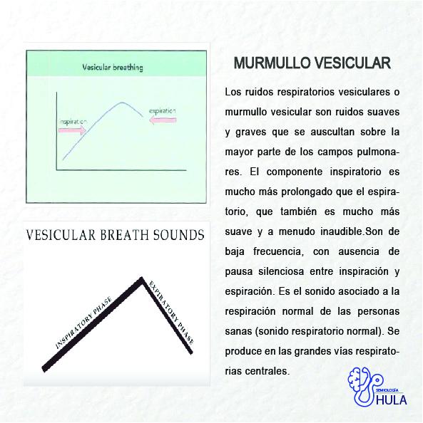 Murmullo Vesicular