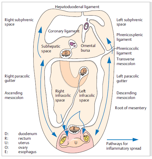 Cavidad Peritoneal