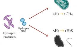 Sobrecrecimiento Bacteriano
